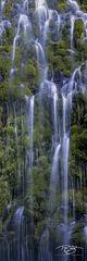 moss, waterfall, portrait, tall, weeping, cascades, dripping