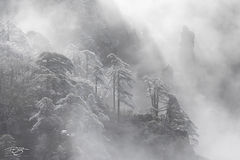 huangshan; china; yellow mountains; floating mountains; clouds; inversion; fog; spires; towers; xihai, frost, frosty, frosted, black and white, monochrome, huangshan pine