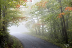 autumn, fall, colour, colours, color, colors, leaves, new england, fog, road, path, trail