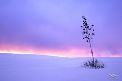 New Mexico, soaptree yucca, sunset, storm clouds, fiery sunset, pastel, purple, lavender sky, peace, calm, simplicity, white sands, white sands national monument, buried alive, snow, sand, white sands