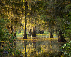 Morning in the Swamp