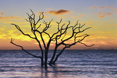 South Carolina, boneyard, skeleton, tree, botany bay, edisto island, dead tree, sea of tranquility, water, coast, surf, ocean, daybreak, firey, fire, sunrise, peace, peaceful, calming, zen, yoga, silh