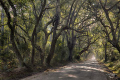 road, trail, passage, track, trees, tree lined canopy, go to the light, pathway, path, passing through, south carolina, live oak