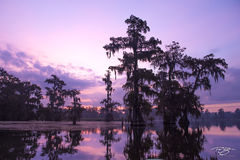 swamp, bayou, louisiana, dawn, early morning, quiet, reflection, bald cypress, tree, cypress, atchafalaya basin, lake martin, daybreak, morning, silhouette, swamp thing, gators, swamp people, purple