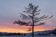russia, lake baikal, siberia, ice, winter, Pribaikalsky National Park, Прибайкальский национальный парк, Pribaykalski National Park, tree, sunset, silhouette
