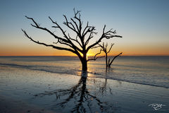 South Carolina, boneyard, skeleton, tree, botany bay, edisto island, dead tree, sea of tranquility, water, coast, surf, ocean, daybreak, fiery, fire, sunrise, peace, peaceful, calming, zen, yoga, silh