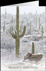 Season's Greeting Cards - Sonoran Snowfall - Pack of 10