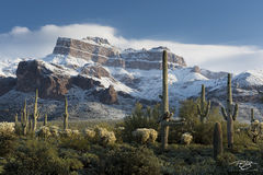 Arizona, Superstition Mountain, Sonoran Winter, gold canyon, snow on Superstition Mountain, cactus, saguaro, superstition wilderness, snow in the desert, sonoran desert, winter, snow, saguaro cactus,