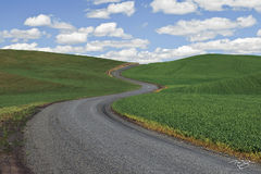 Palouse, rolling farmland, rolling hills, the palouse, pullman, washington, farmland, windows background, lentil fields, legumes, farming, long & winding road, long and winding road, curvy road, road