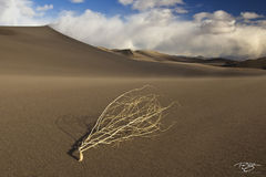 sand dunes, sand, dune, blowing sand, sand storm, wind storm, tumbleweed, clouds, strong winds, windy