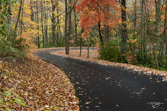 autumn, fall, colour, colours, color, colors, leaves, new england, vermont, west virginia, road, street, curved road, trail, path