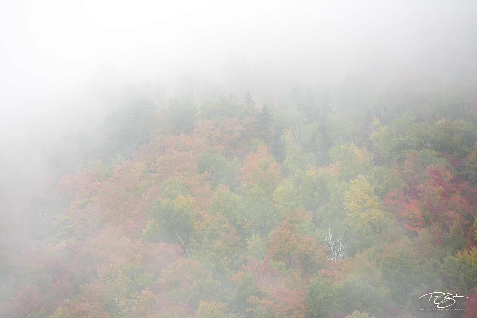 autumn, fall, colour, colours, color, colors, leaves, new england, new hampshire, fog, white mountains, photo