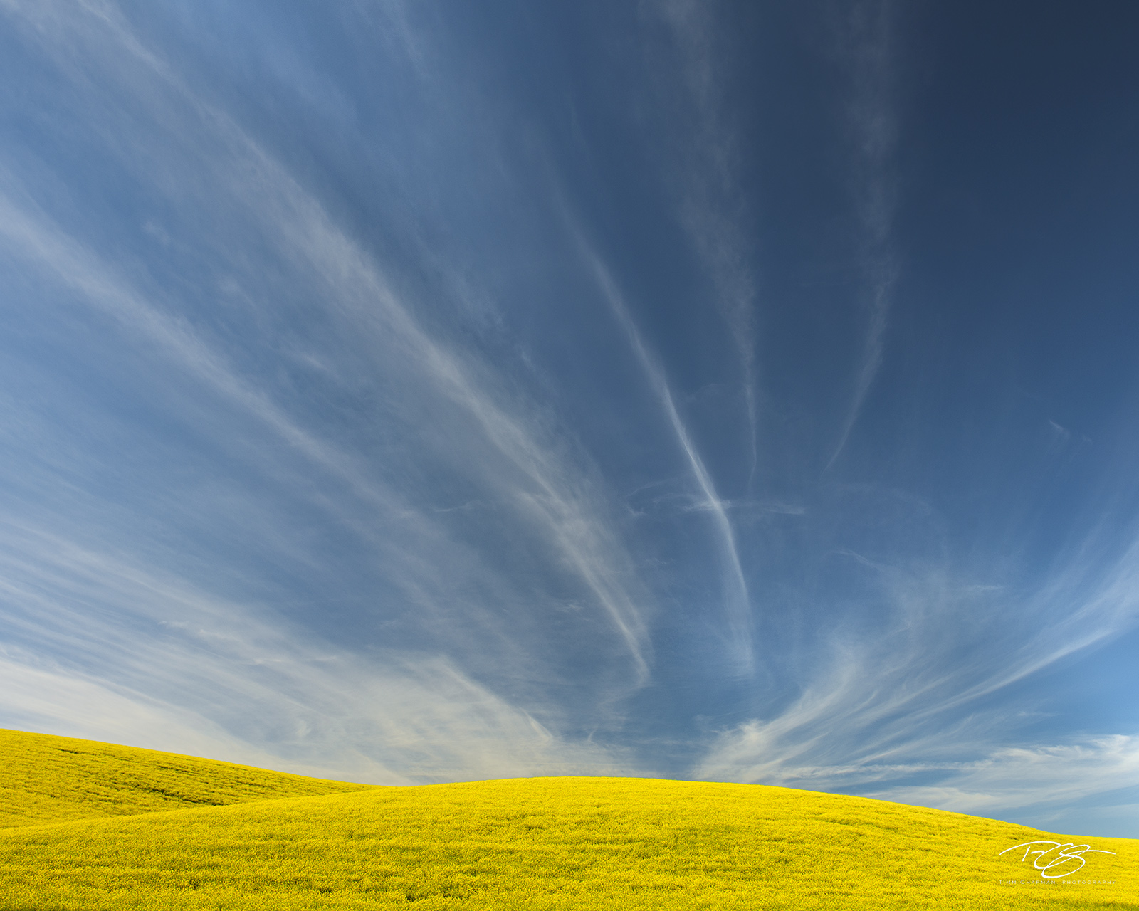Canola, farm, sky, blue sky, palouse, farmland, field of gold, stratus clouds, wispy, horestail, clouds, canola in bloom, photo