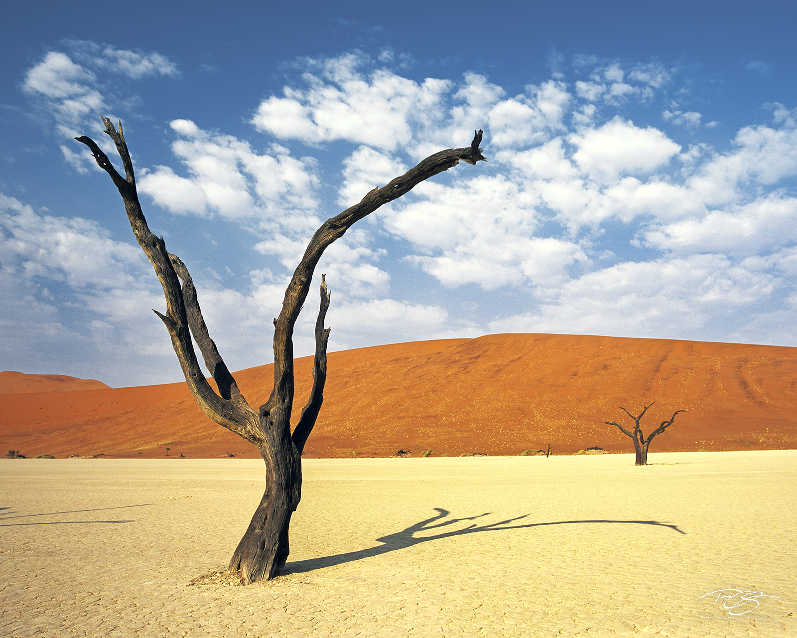 Namibia, coral sand dunes, camelthorn acacia, dead trees, dry deserted, namib desert, dead vlei, sossusvlei, world's tallest sand dunes, abstract, dry lake bed, namibia, southwest africa, swakopmund, photo
