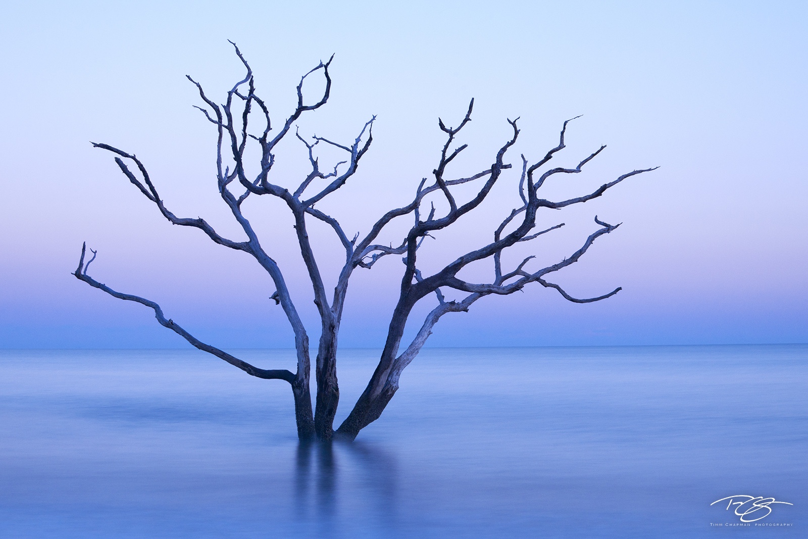 South Carolina, boneyard, skeleton, tree, botany bay, edisto island, dead tree, eventide, water, coast, surf, ocean, dusk, sunset, pastel, pink, blue, purple, peace, peaceful, calming, zen, yoga, silh, photo