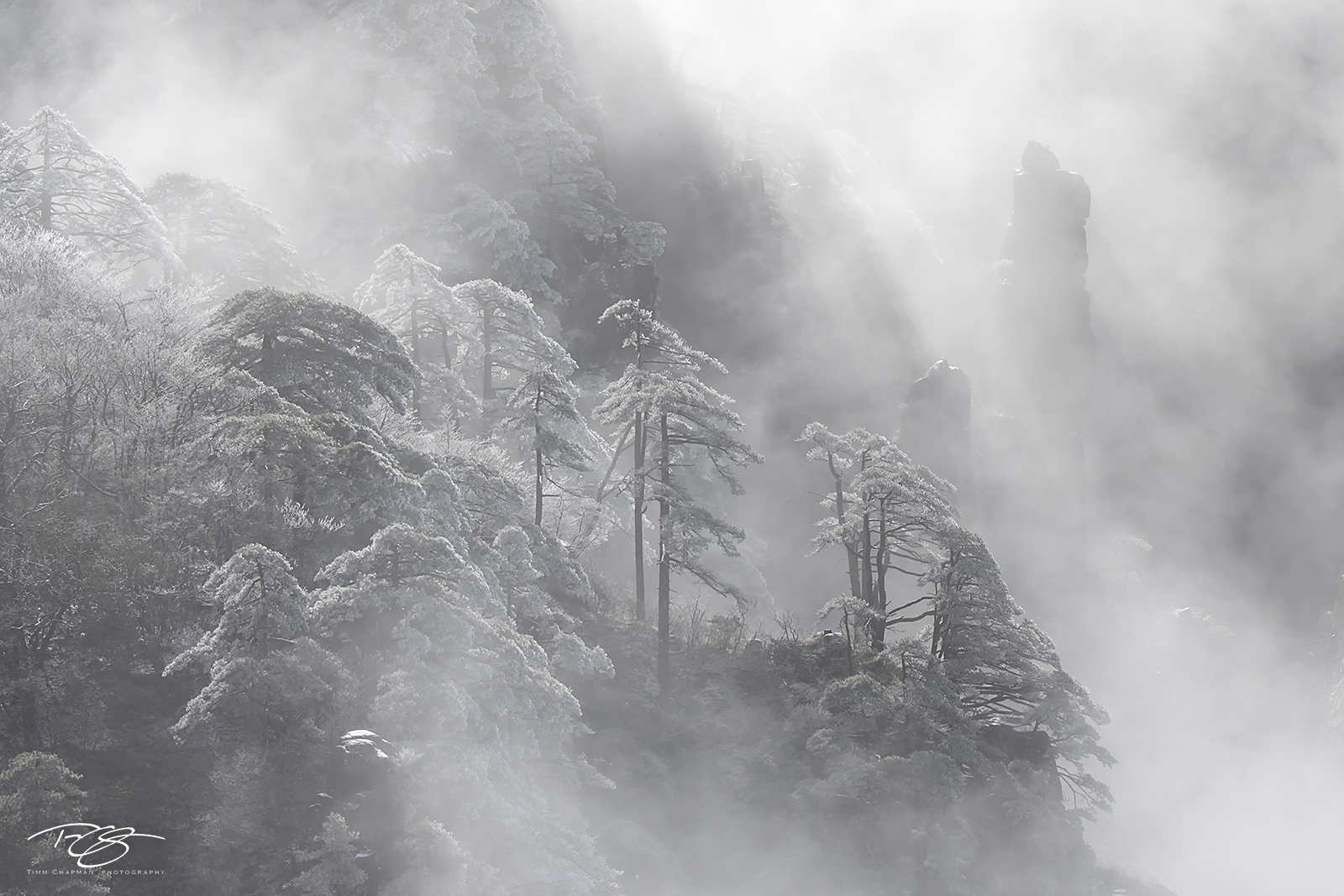 huangshan; china; yellow mountains; floating mountains; clouds; inversion; fog; spires; towers; xihai, frost, frosty, frosted, black and white, monochrome, huangshan pine, photo