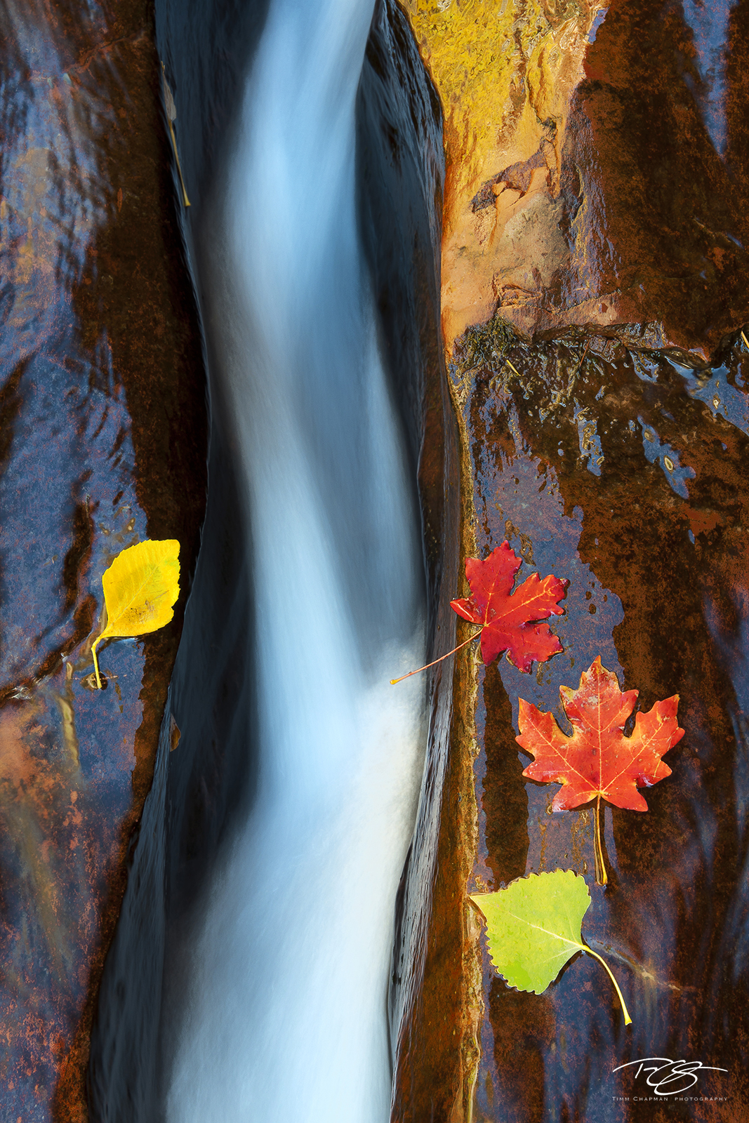zion national park, zion, zionflow, virgin river, flowing water, golden canyons, golden, light, canyon walls, wet rock, Go with the Flow, utah, photo