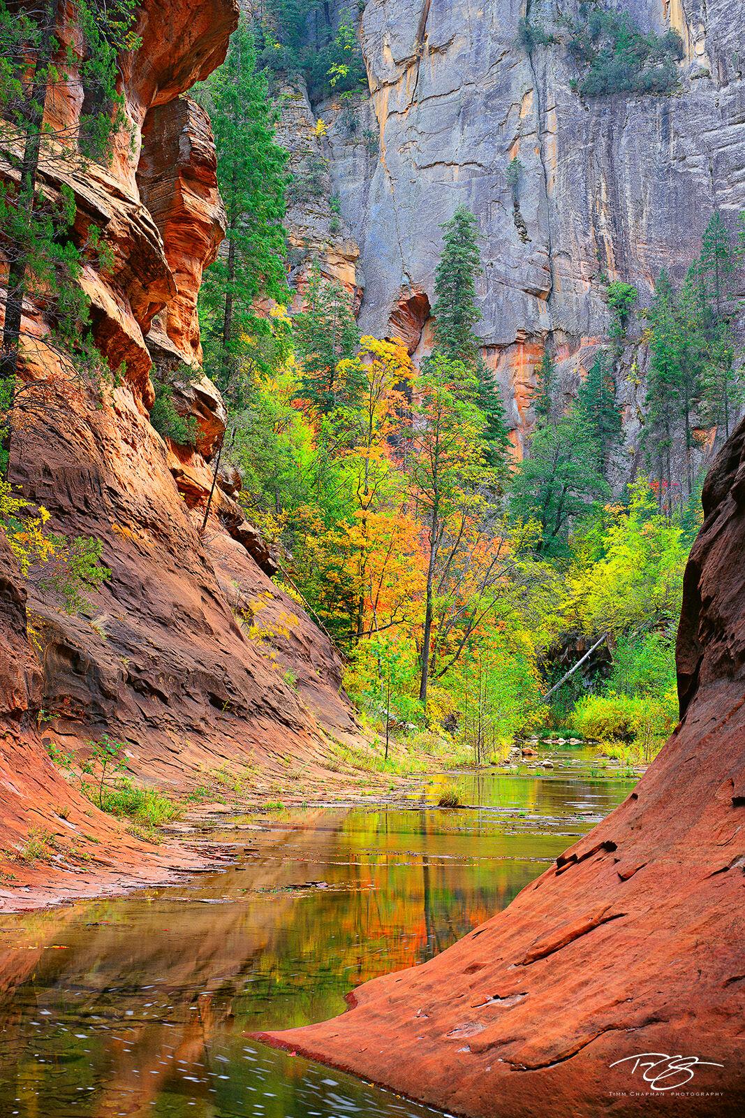 Arizona, Sedona, red rocks, oak creek, canyon, northern arizona, oak creek canyon, autumn color, autumn colour, fall colour, fall colours, reflection, vortex, tranquil landscapes, spectacular color, photo