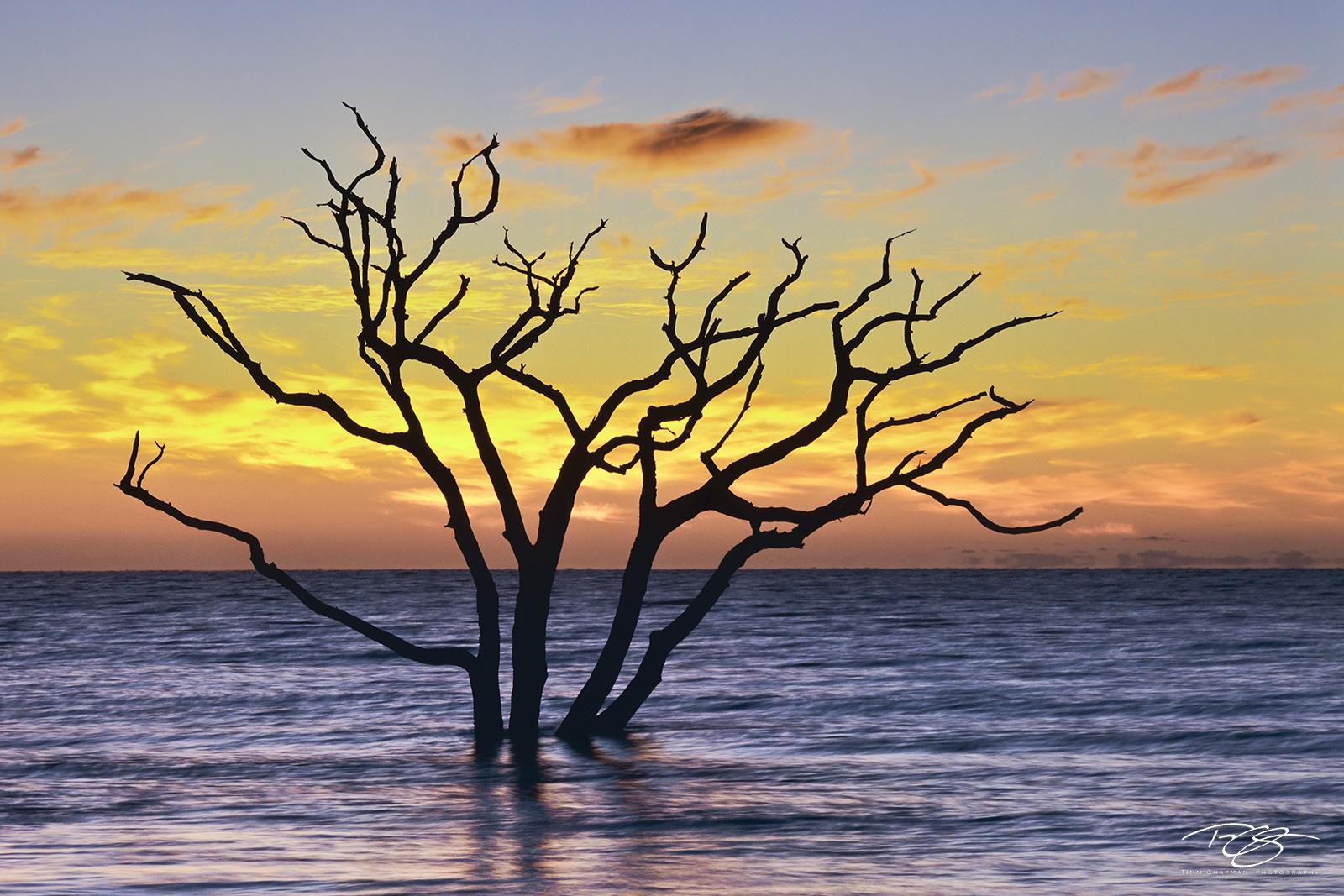 South Carolina, boneyard, skeleton, tree, botany bay, edisto island, dead tree, sea of tranquility, water, coast, surf, ocean, daybreak, firey, fire, sunrise, peace, peaceful, calming, zen, yoga, silh, photo