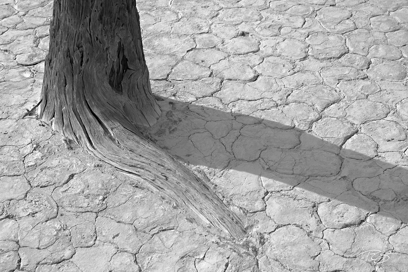 Namibia, coral sand dunes, black and white, monochrome, parched, cracked mud, camelthorn acacia, dead trees, dry deserted, namib desert, dead vlei, sossusvlei, world's tallest sand dunes, abstract, dr, photo