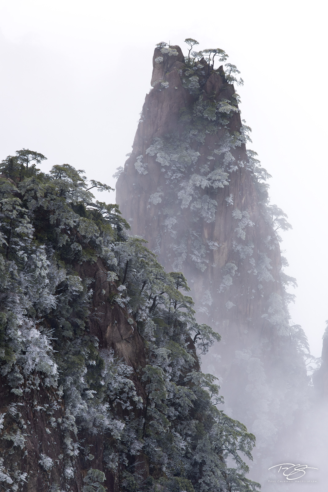 Frigid air cloaks Huangshan Pine trees in a wintery frost