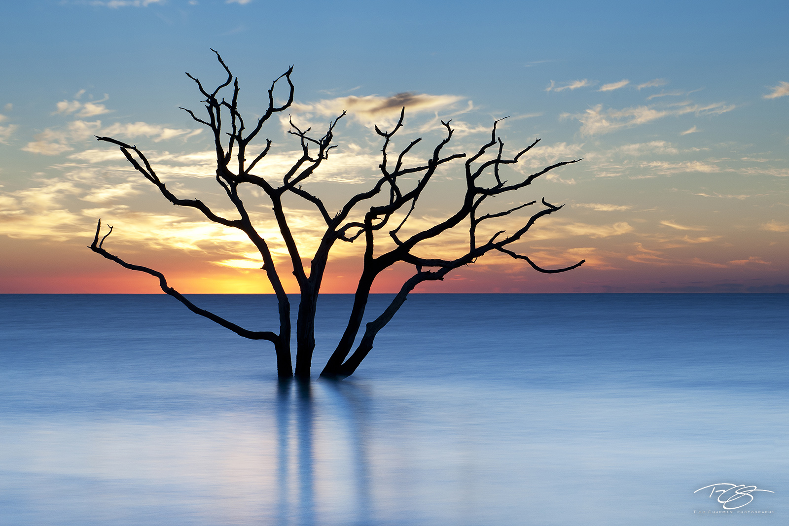 South Carolina, boneyard, skeleton, tree, botany bay, edisto island, dead tree, sea of tranquility, water, coast, surf, ocean, daybreak, firey, fire, sunrise, peace, peaceful, calming, zen, yoga, silh, photo