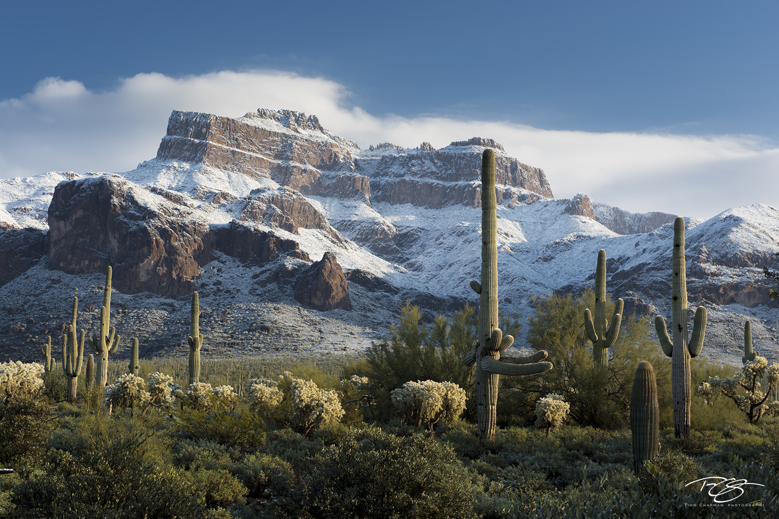 Arizona, Superstition Mountain, Sonoran Winter, gold canyon, snow on Superstition Mountain, cactus, saguaro, superstition wilderness, snow in the desert, sonoran desert, winter, snow, saguaro cactus,,, photo