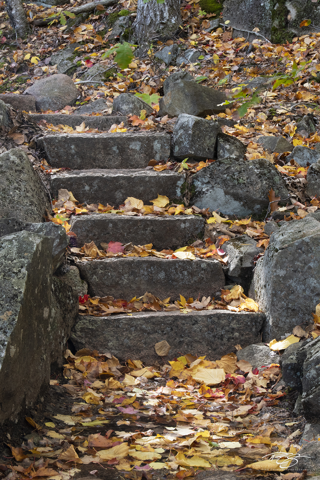 autumn, fall, colour, colours, color, colors, leaves, maine, arcadia national park, stone steps, stone stairs, emery path, emery trail, homans path, homans trail, photo
