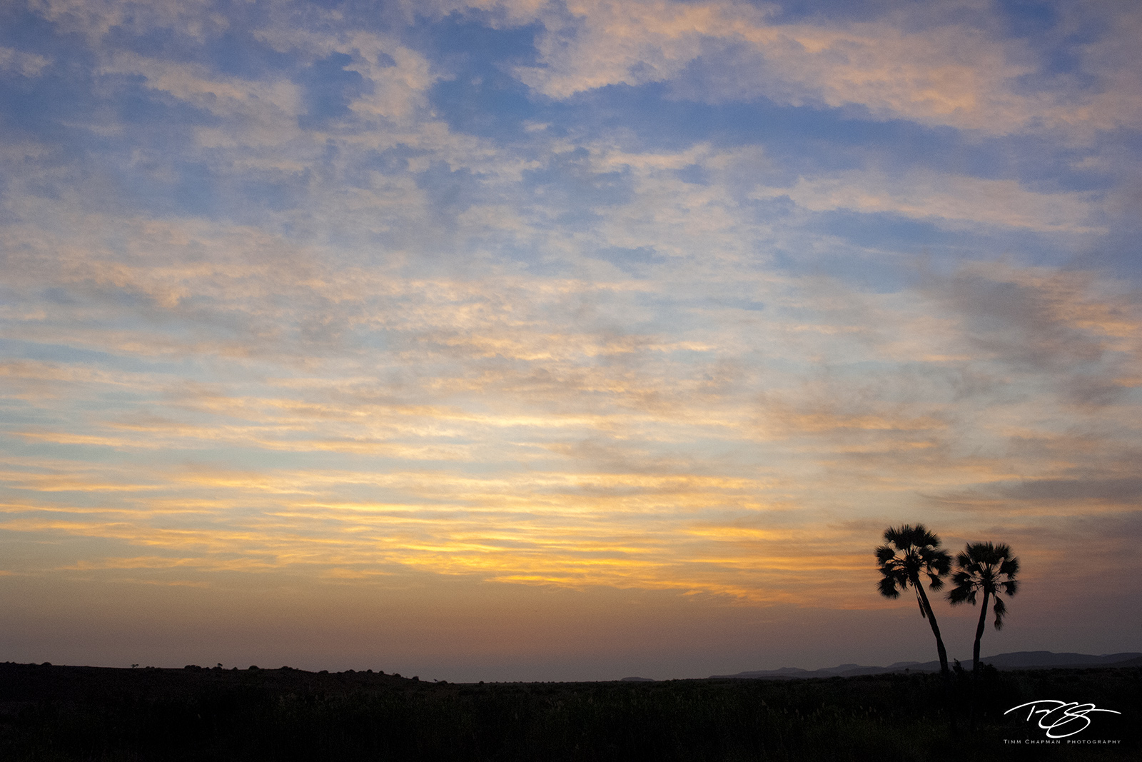 namibia, palmwag, palm trees, silhouette, sunset, twilight, predawn, namib desert, southwest africa, cloudy, photo