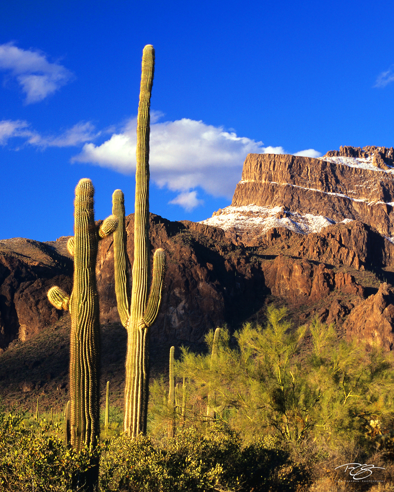 Arizona, Superstition Mountain, Superstition snows, snow on Superstition Mountain, cactus, saguaro, superstition wildersness, snow in the desert, golden light, snow, saguaro cactus, cacti, photo
