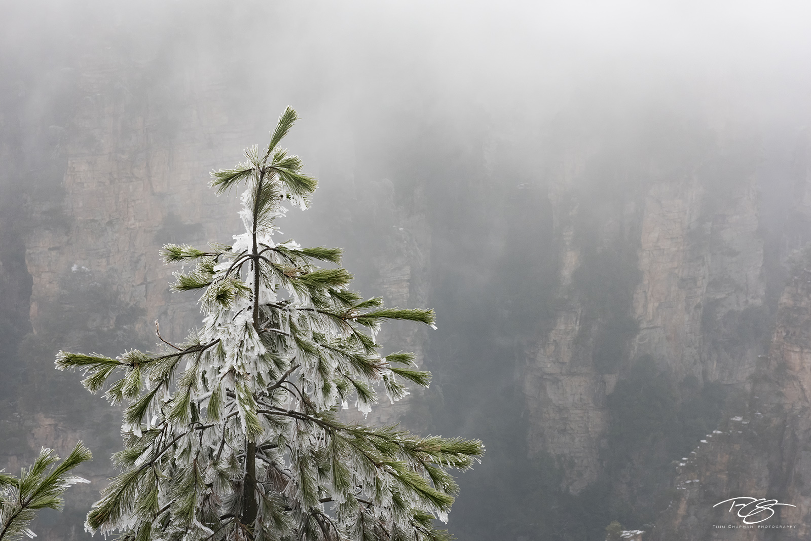 pine, frost, frosty, snow, winter, wintry, green, tree, ice, icy, wulingyuan, zhangjiajie, china