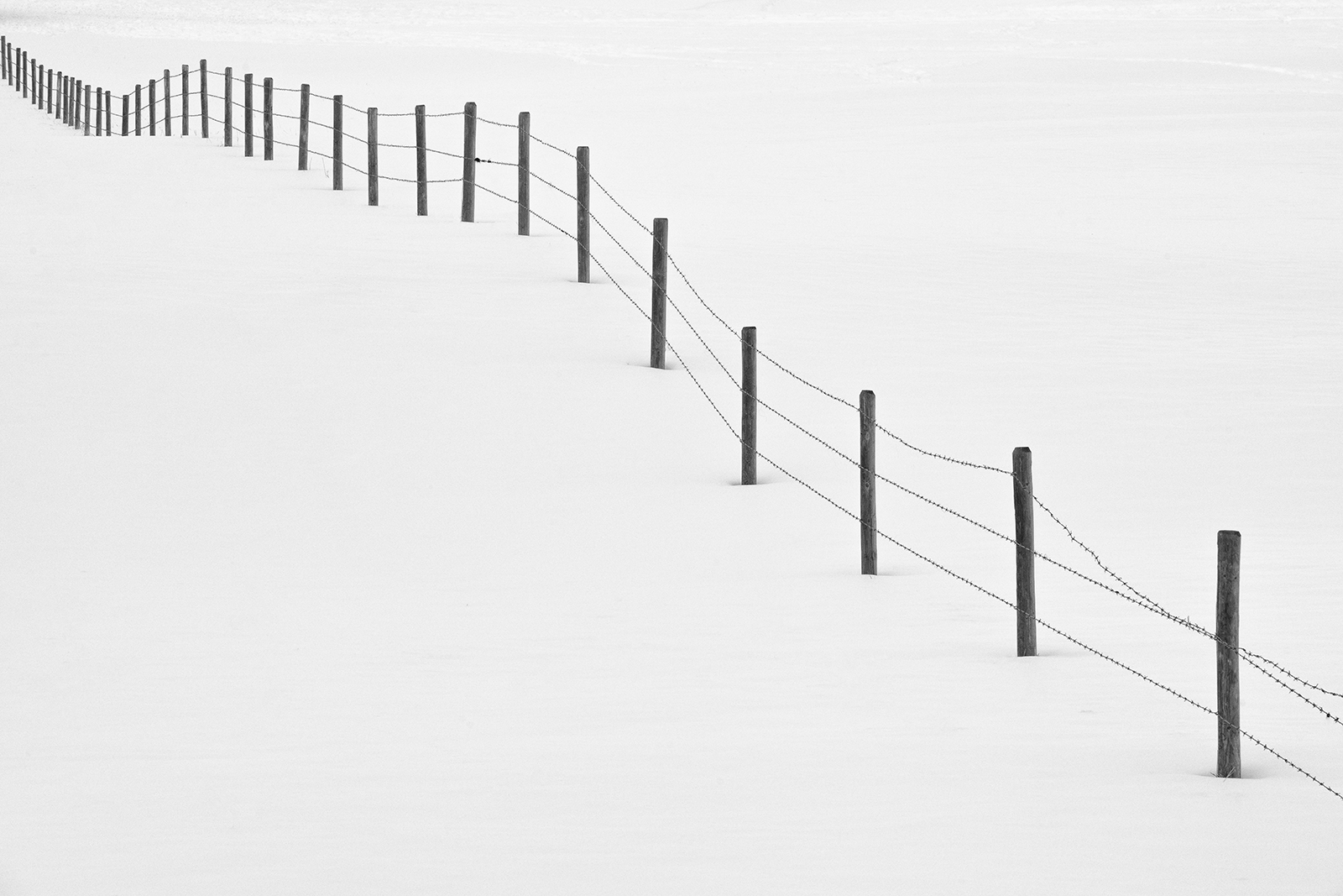 Like bars awaiting notes to be written, a lonely barbed wire fence meanders across a snowy prairie