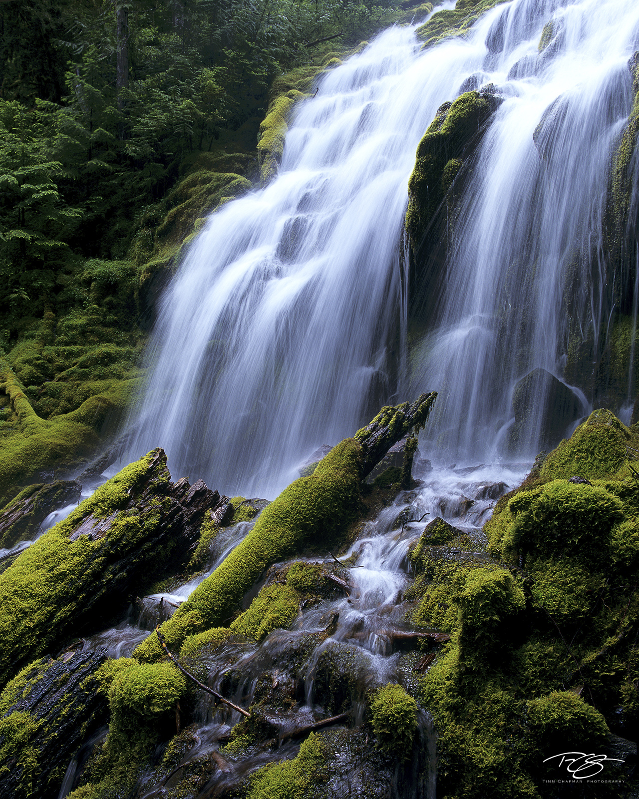 Much of Oregon's Willamette National Forest is rainforest; abundant precipitation and waterfalls feed the forest and produce...