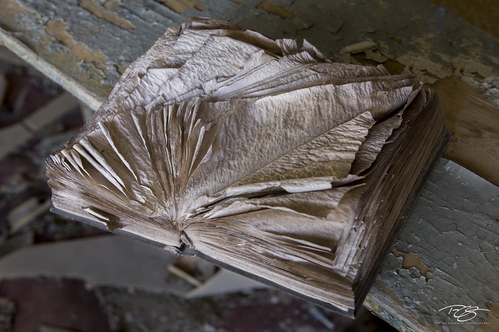 chernobyl, chornobyl, pripyat, exclusion zone, abandoned, forgotten, wasteland, radioactive, decay, peeling paint, middle school, school, library, book, worn, torn pages, weathered, well read, photo